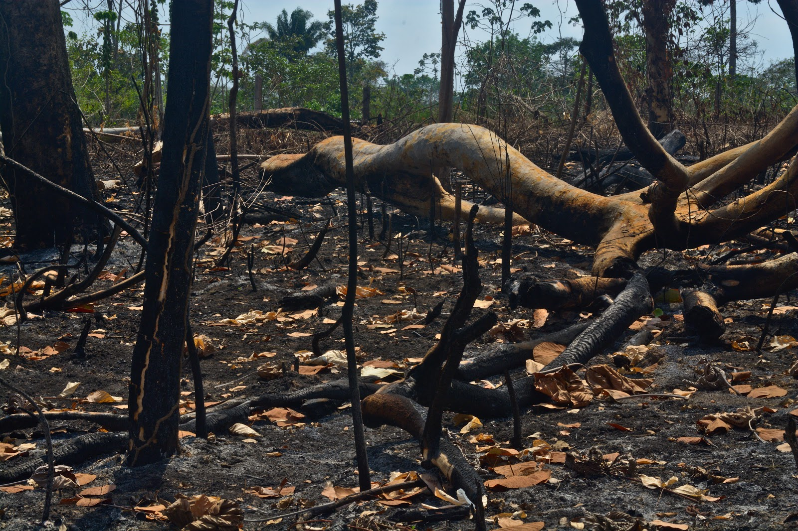 The win-win situation hidden behind the Amazonia fires