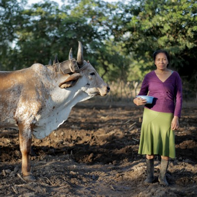 Serious criticism of UN Food Systems Summit