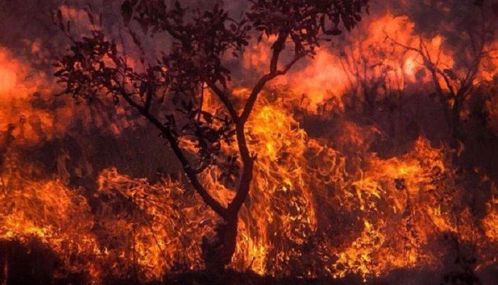 BlackRock invests in burning the Amazon